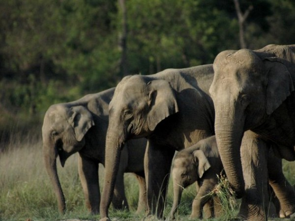 Rishikesh photos, Rajaji National Park - elephant_familyn