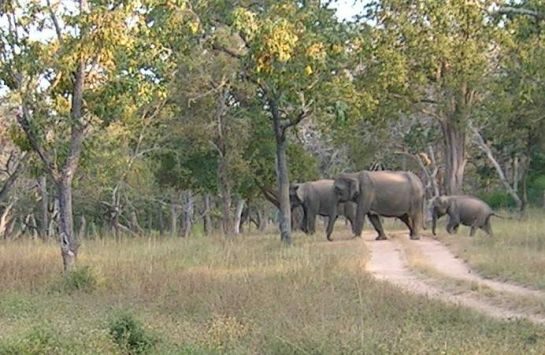 Bandipur photos, Bandipur National Park - Elephants Cross A Road