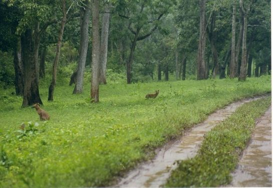 Nagarhole Photos - A Path Through the Jungle
