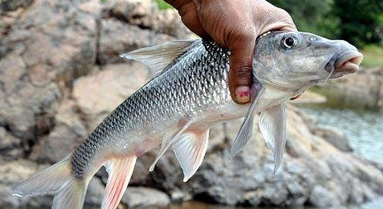 Cauvery Fishing Camp Photos - Fishing