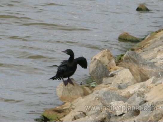 Bangalore photos, Lumbini Gardens - Little Bird