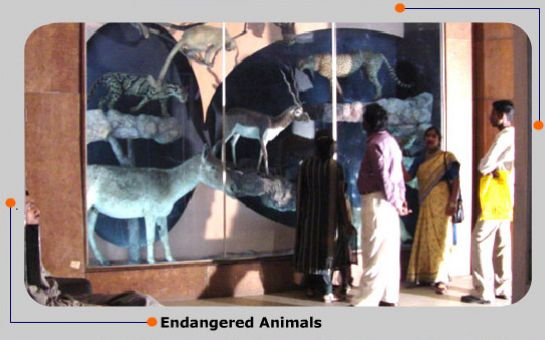 Mysore photos, Regional Museum of Natural History - Animal Species
