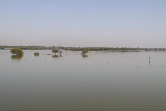 Ahmedabad photos, Thol Lake Bird Sanctuary - Nature at its Best
