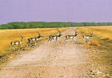 Bhavnagar photos, Velavadar Black Buck National Park - From the Park