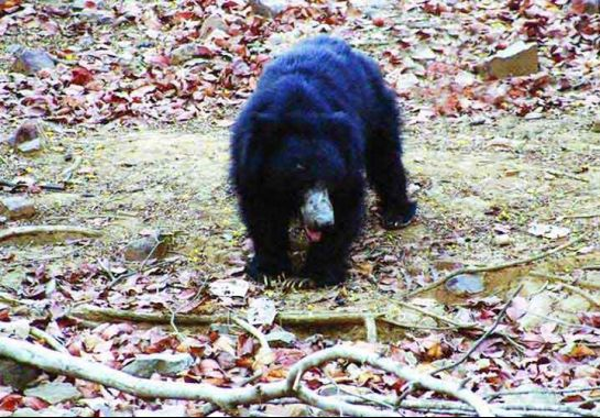 Palanpur photos, Jessore Sloth Bear Sanctuary