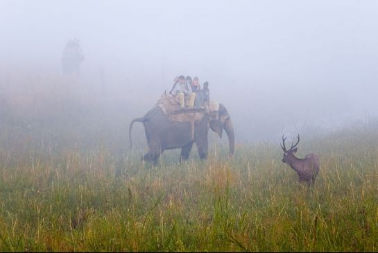 Corbett National Park photos, Elephant Ride - Elephant and the riders
