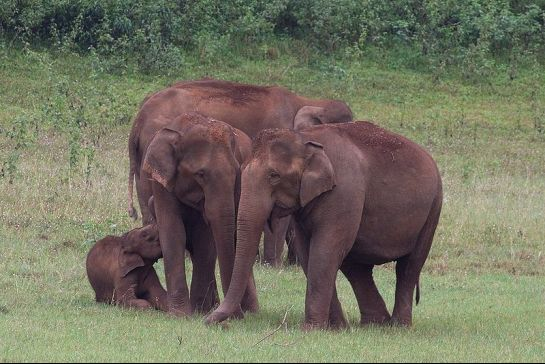 Thekkady photos, Periyar Wildlife Sanctuary - Elephants