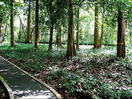 Nilambur photos, Conolly's Plot- Teak Plantation