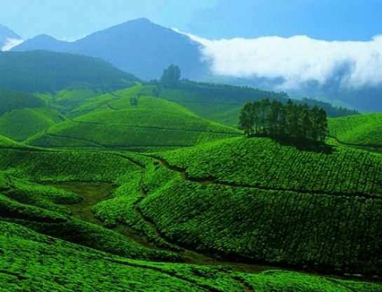 Devikulam photos, Tea and Spice Plantations