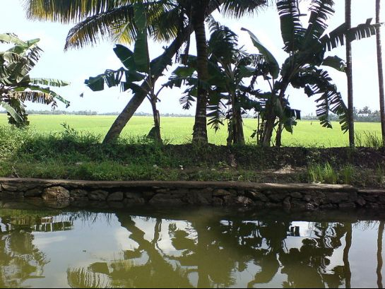 Alleppey photos, Kuttanad - Fields