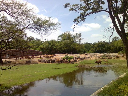 Hyderabad photos, Nehru Zoological Park - Bunch of Deer