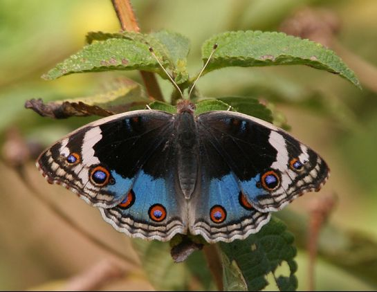 Hyderabad photos, Hyderabad Botanical Garden - Butterfly
