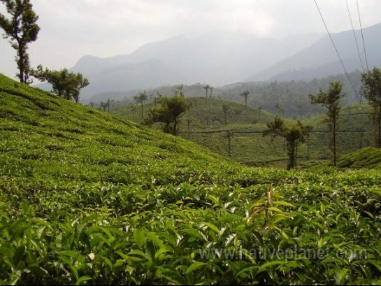 Wayanad photos, Wayanad - Lush Green Hills