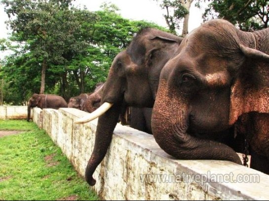 Dubare photos, Elephant Training Camp - Elephants Relaxing