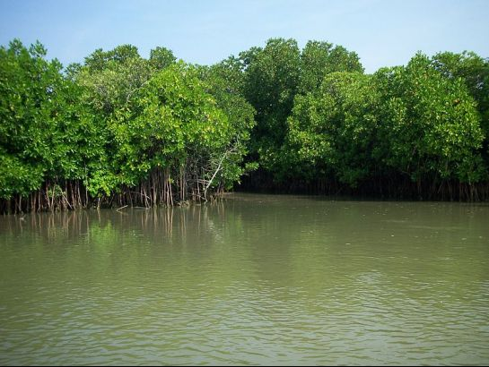 Cuddalore photos, Pichavaram Mangrove Forest - Green water