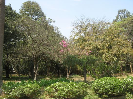 Bangalore photos, Cubbon Park - Green view