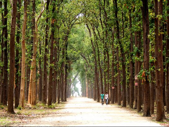 Gorakhpur photos, Kushmi Forest - Thick and Lush Forest