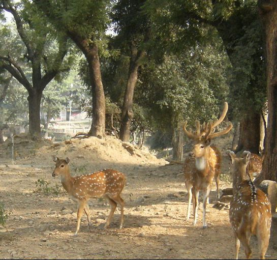 Sarnath photos, Deer Park - An adorable picture of deers