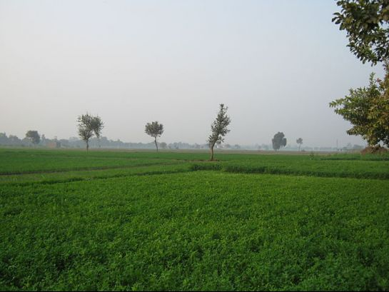 Sonipat photos, Green Fields