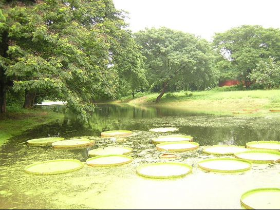Howrah photos, Indian Botanical Gardens - Biggest Water Body