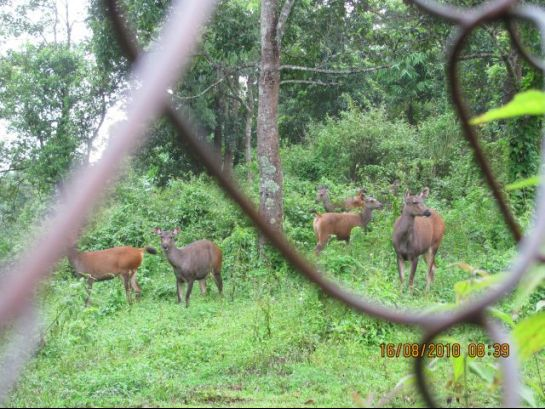 Thenzawl photos, Thenzawl Deer park - An inside view of the park