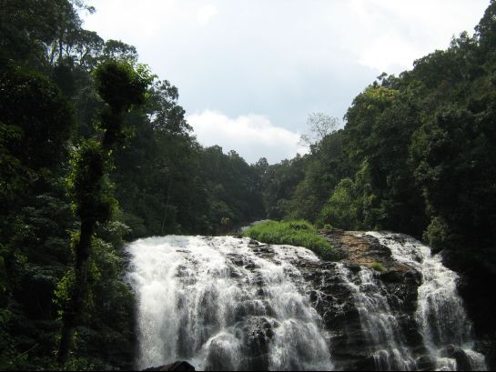 Coorg photos, Abbey Falls - Gush; Bush; Sush!
