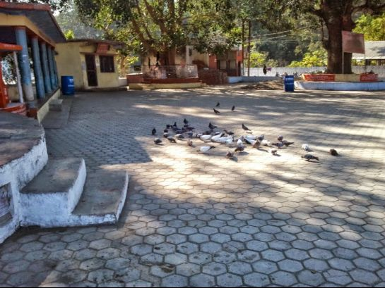 Corbett National Park photos, Garjia Temple - Birds in Temple
