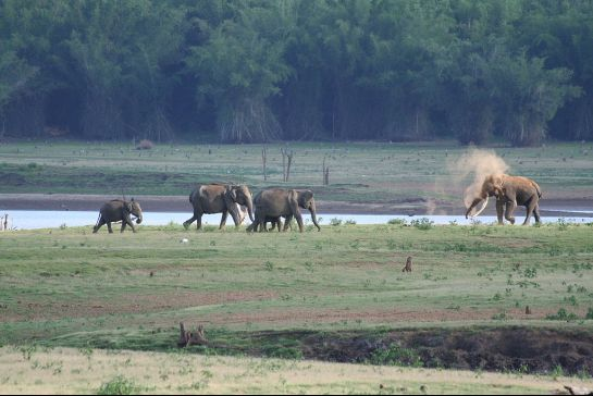 Kabini photos, Elephant Safari