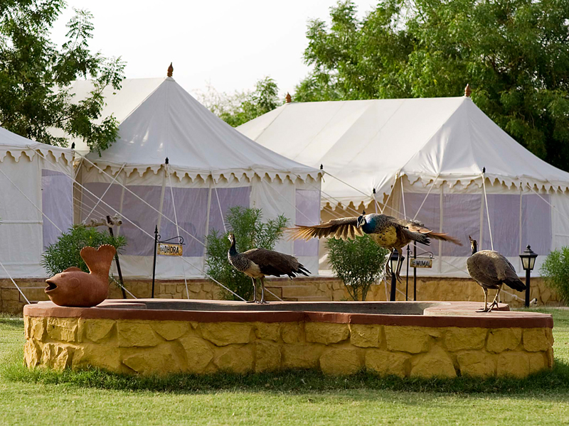 Tents at the resort