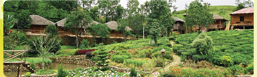 Cottages amidst greenery