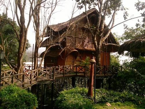 Bamboo Tree House amidst Greenery