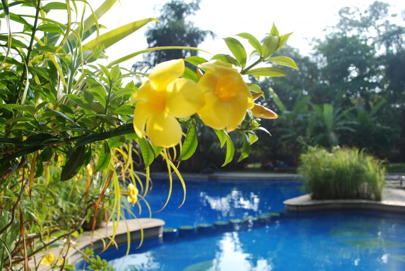 Poolside Yellow Flowers