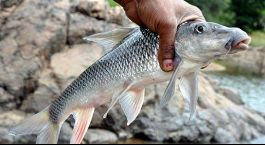 Cauvery Fishing Camp