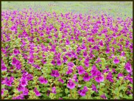 Kaas Plateau and Kaas Lake, Satara