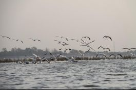 Nalsarovar Bird Sanctuary, Ahmedabad