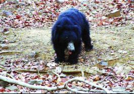 Jessore Sloth Bear Sanctuary, Palanpur