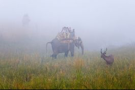 Elephant Ride, Corbett National Park