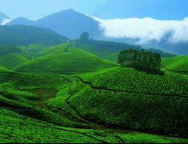 Tea and Spice Plantations, Devikulam