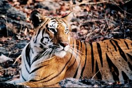Pench National Park, Pench