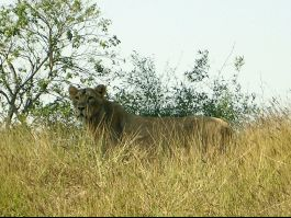 Vasona Lion Safari, Silvassa