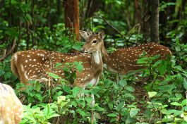 Dalma Wildlife Sanctuary, Jamshedpur