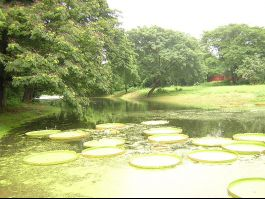 Indian Botanical Gardens, Howrah