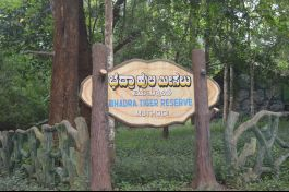 Muthodi Forest Camp, Chikmagalur