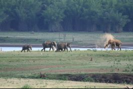 Elephant Safari, Kabini