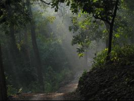 Corbett National Park