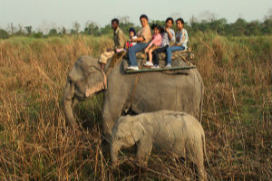 A Tryst with Wildlife at Kaziranga National Park