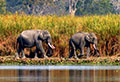 Kabini - The Pachyderm Capital