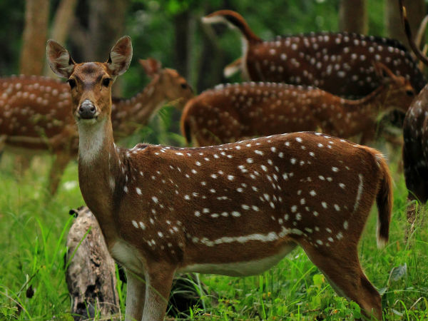 Mudumalai Tourism - A Melting Pot of Nature's Finest